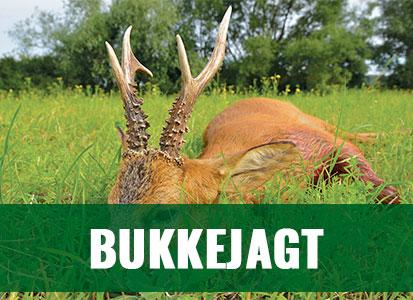 Bukkejagt